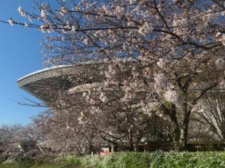 【埼スタ花図鑑】いよいよ開花、スタジアム花見を楽しもう♪